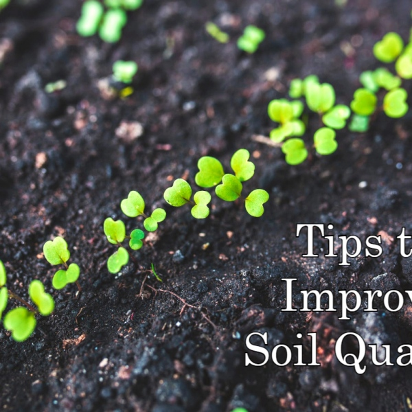 Garden Soil Maintenance Ideas