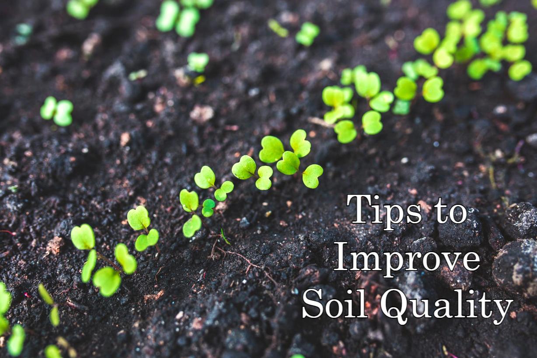 Garden Soil Maintenance Ideas
