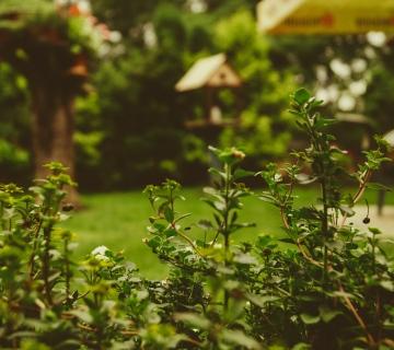 6 Budget-Friendly Garden Makeover Ideas